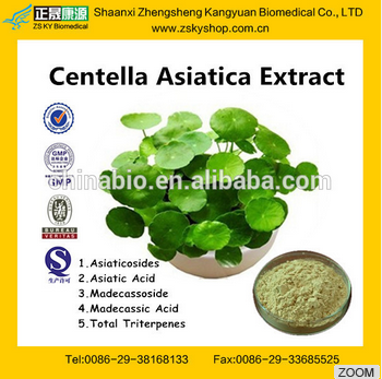 GMP factory supply high quality and natural Gotu Kola extract, centella asiatica extract Herba Centellae extract powder