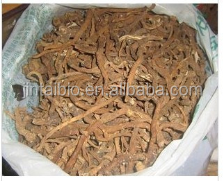 pure powdered herba taraxaci dandelion root extract