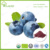 Organic certified organic blueberry powder bulk