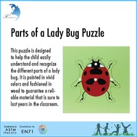 Touch exercise Geography montessori wooden toys lady bug puzzle