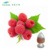 Manufacturer Supply Fructus Rubi Raspberry Leaf Extract Powder 4:1 5:1 10:1