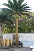 only $1999.98 sale 8m height artificial outdoor uses cheap huge with texture fiberglass trunk canary date palm tree E12 25S09
