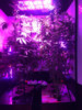 agricultural greenhouse indoor grow box hydroponic LED grow room