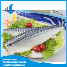 IQF Frozen Atlantic,Norway Mackerel Fish Fillet with good quality