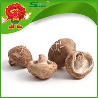 frozen mushroom supplier from China, golden vegetable supplier