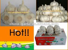Common Cultivation Type and Fresh Style Dry Garlic new crop Farm Products