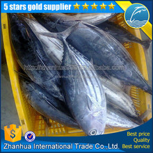 Whole seafood frozen skipjack tuna by fishing lamp from zhoushan for canned