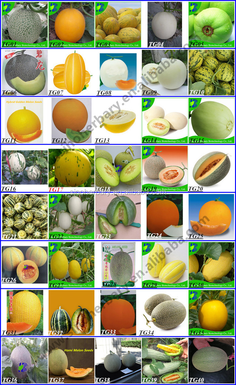 2018 Newest hybrid fruit seed sweet melon seeds for growing