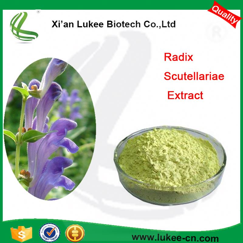 Factory Supply Scutellaria Baicalensis Extract , Baicalein , Baicalin
