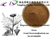 Supply Pure Natural Rhaponticum Carthamoides Extract 10:1 With High Quality