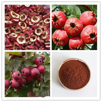 Hawthorn Leaf Extract , Hawthorn Fruit Leaf Extract100% Factory sale