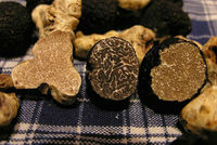 Black and White Truffles Available Good Pricing