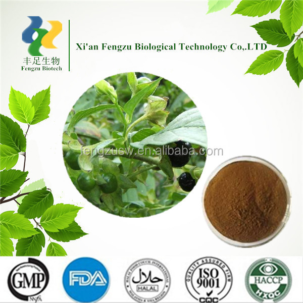 GMP Manufacturer supply Atropa belladonna powder