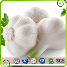 Natural Wholesale Garlic powder, Bulk supply odorless Garlic Extract 10:1 20:1, Allicin 5%,2%,1%