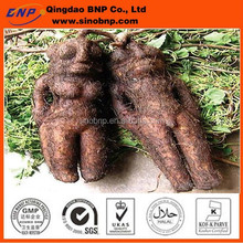 Best 100% Natural Fo-ti Root Extract Powder He Shou Wu Extract Powder