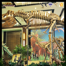 DW-1036 Handmade High Quality Fiberglass Dinosaur Skeleton Exhibition