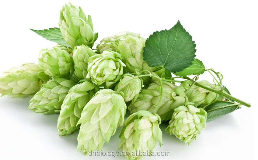 High quality natural European Hop Flower extract, Humulus lupulus extract for Beer