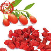 Goji berries health benefits&Antioxidants,Ningxia Gou qi zi fruit with high quality at best FOB price