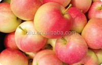 New crop bright red color royal gala apple fresh fruits of season