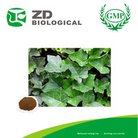 ivy leaf herb powder/ ivy plants extract