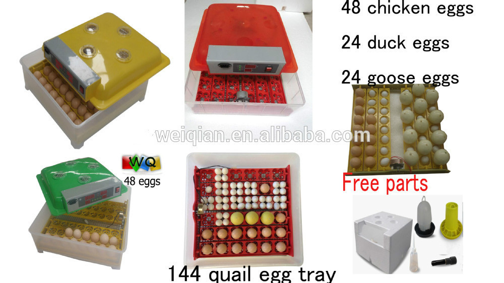 Mais novo Hot sale automatic mini egg incubator