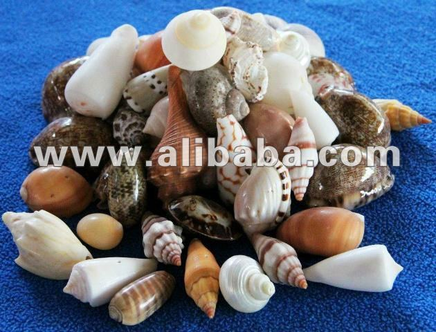 Assorted Raw SeaShell Materials