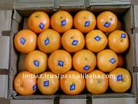 2015 Special Offer - Pakistani Kinnow Citrus fruit