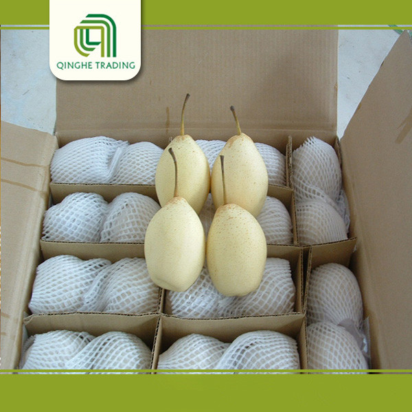 chinese ya pear with best price