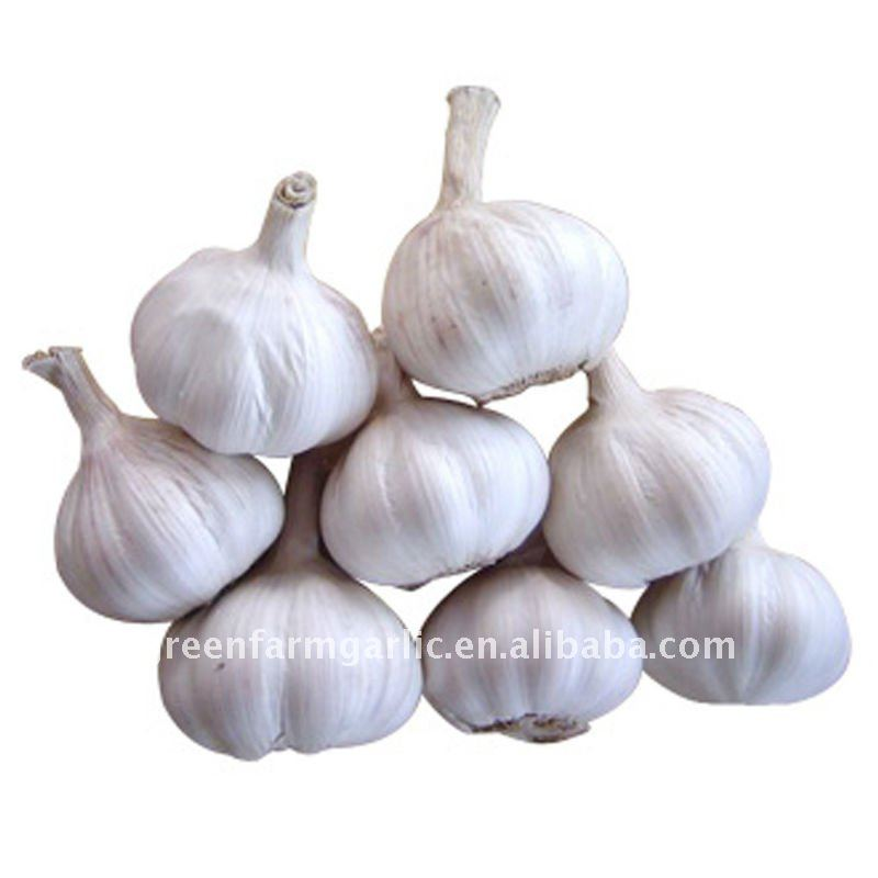 Super QualityJinxiang Pure White Garlic