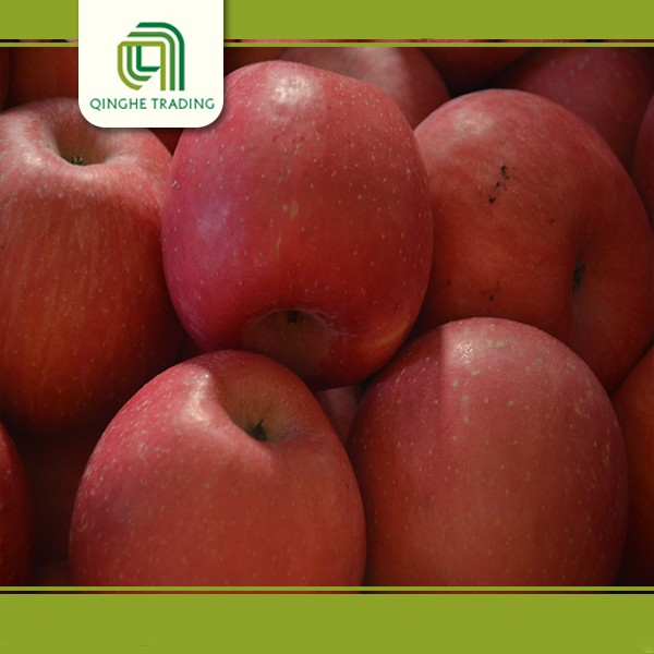 Chinese fresh fruits supplier of fuji apples