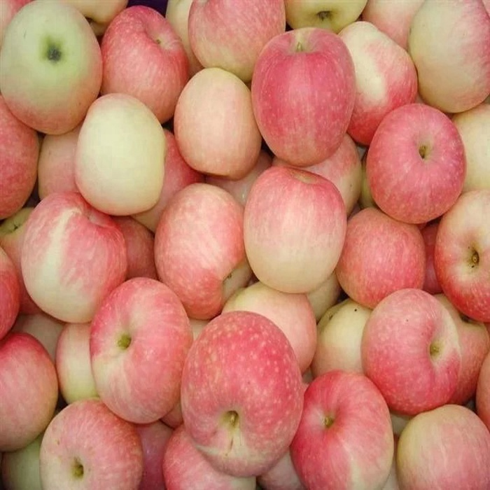 Good quality <strong>apple</strong>/gala <strong>apple</strong>/gala fruit