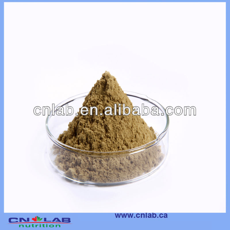 Factory Sell Dong Quai Root Powder