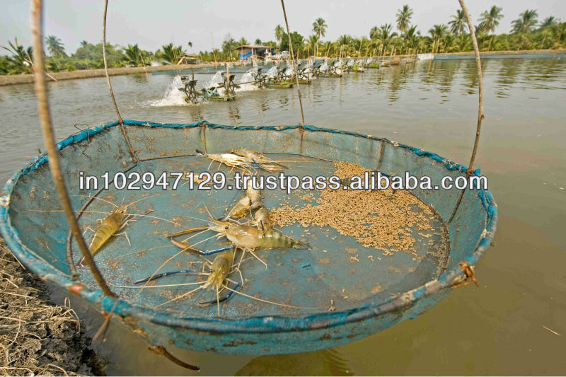 shrimp feed ingredients