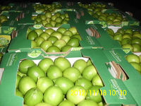 Egyptian lemon with good prices