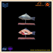 Fish anatomy model 3 parts for biology teaching