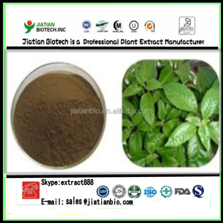 high quality Ashitaba Extract Powder