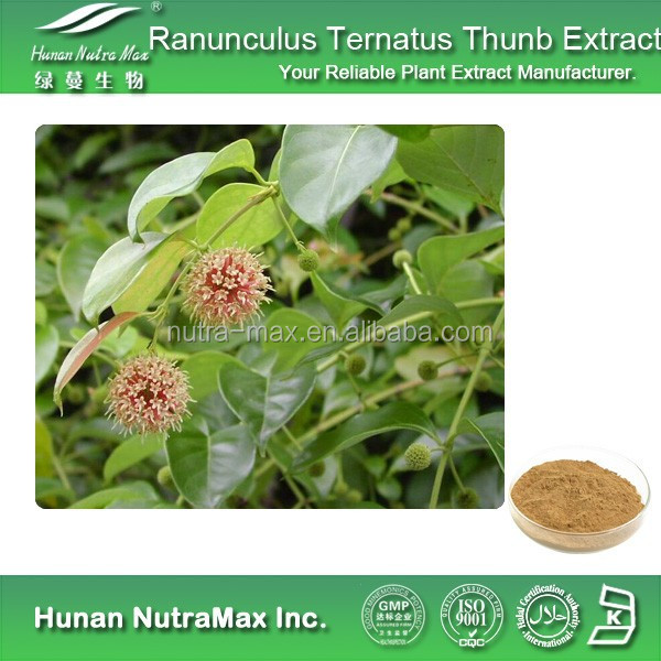 Ranunculus Ternatus Thunb Extract, Ranunculus Ternatus Thunb Extract Powder