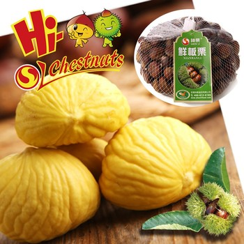 Organic fresh chinese chestnuts for sale