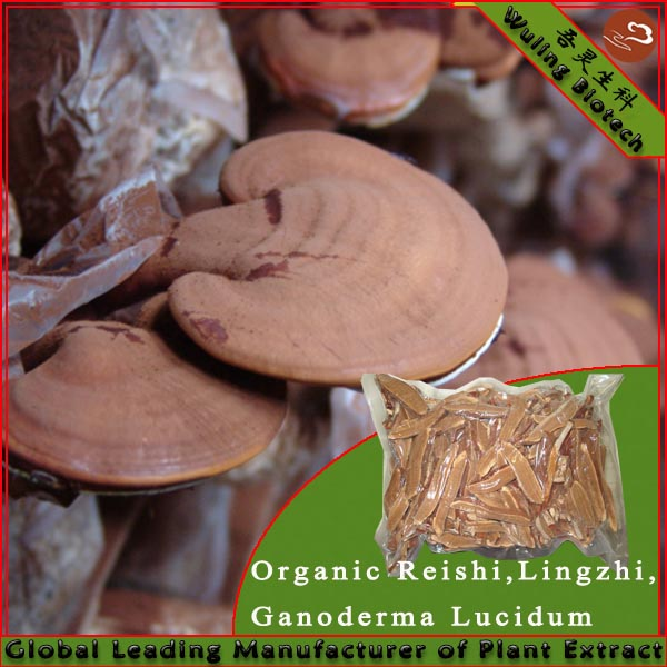 King of the Herb in China-Lingzhi/Ganoderma Slice packed in Bag