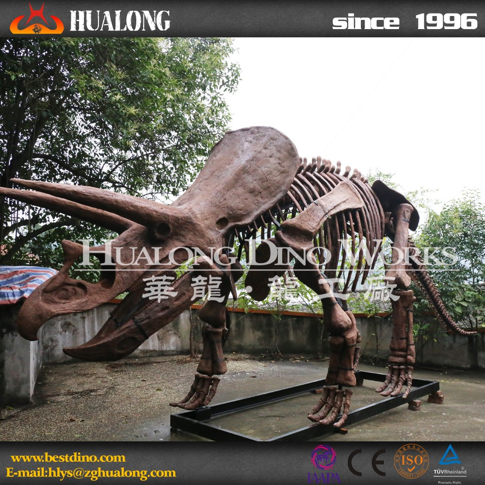 Realistic Dinosaur Skeleton For Scientific Museum