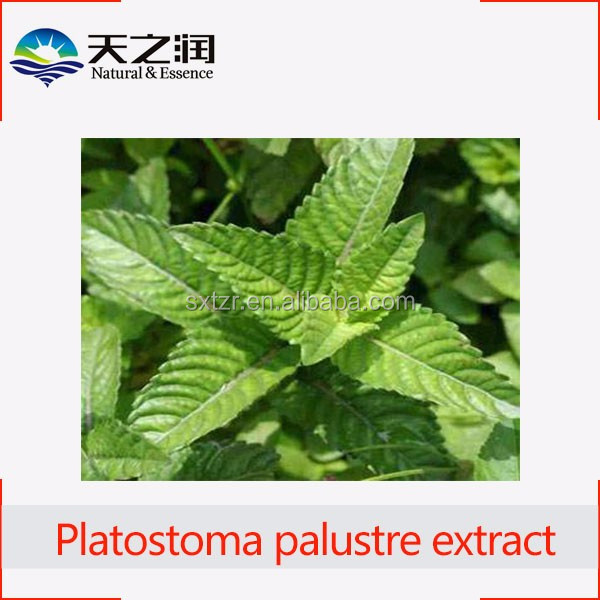 100% natural extract Platostoma palustre powder, jelly grass mesona chinensis