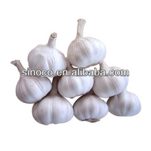 Garlic farms on sale