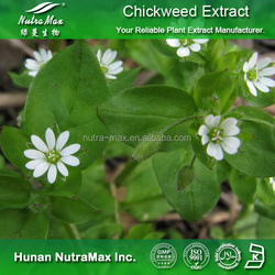 High Quality Chickweed Extract, Chickweed Extract Powder, Chickweed Extract Supplier 4:1~20:1