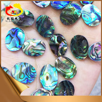 Professional Sea Shell Cutter Natural Rainbow