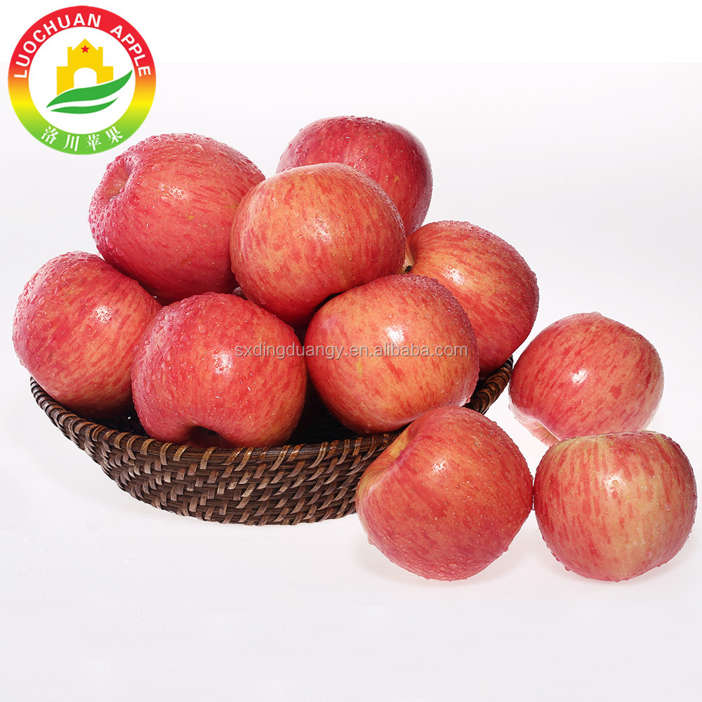 Wholesale Great Quality Container New Fresh Pome Fruit Blush Fuji Apple