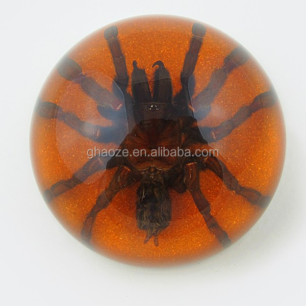 Novelty Gifts For Student Resin Ball Paperweight With Real Insect Black Scorpion Factory