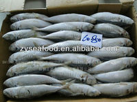 Frozen Horse Mackerel Food
