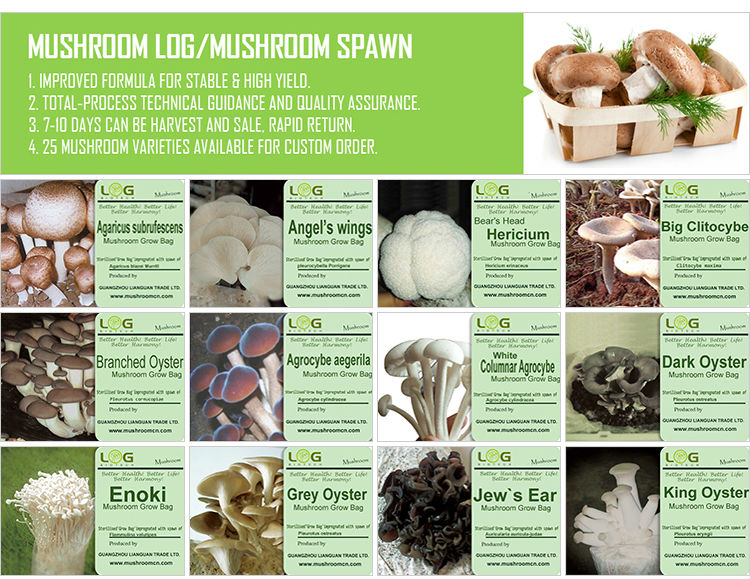 mushrooms in jars for cultivating fresh mushroom