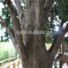 /product-detail/artificial-pine-tree-as-the-base-station-tree-60655662305.html