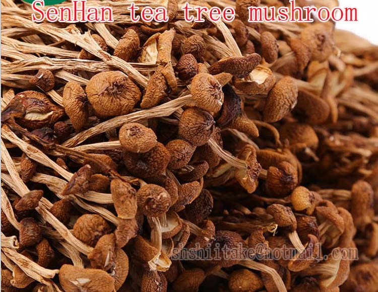 Dried Agrocybe Aegerita mushrooms